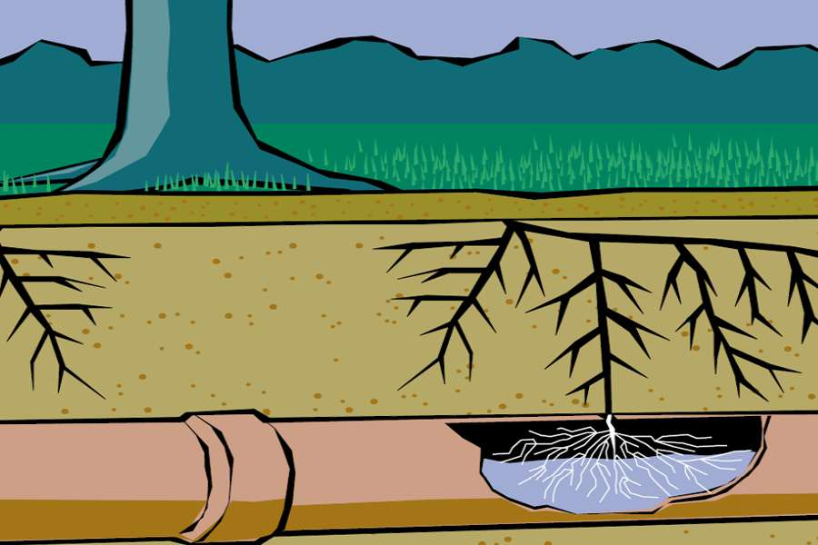 tree roots in sewer pipe