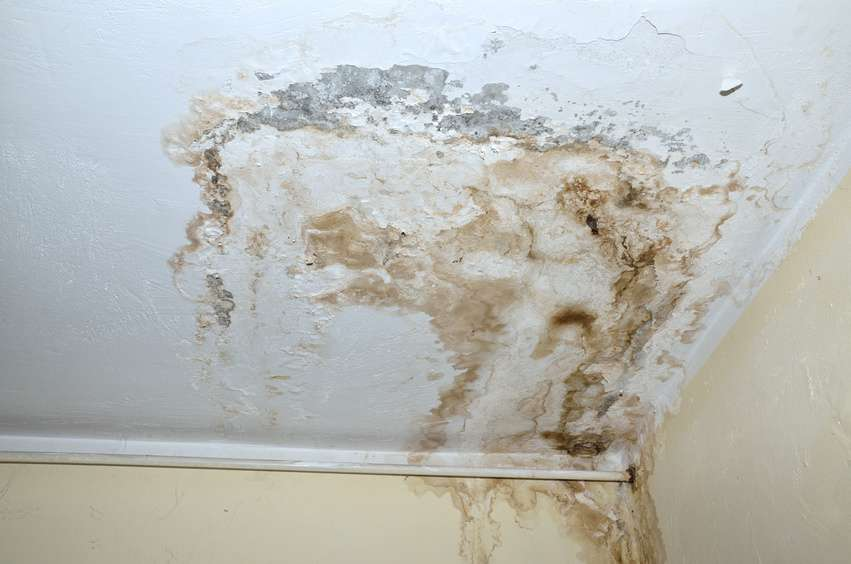 water mold damage