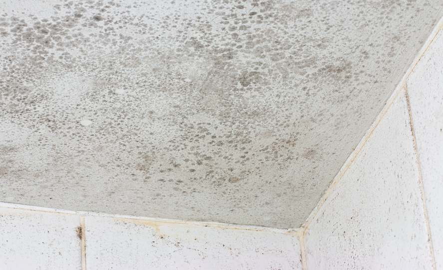 bathroom-ceiling-mold